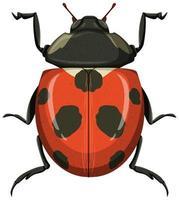 rood lieveheersbeestje of lieveheersbeestje dat op witte achtergrond wordt geïsoleerd vector