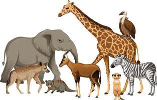 groep wilde Afrikaanse dieren op witte achtergrond vector