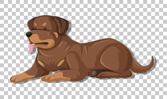 Rottweiler in liggende positie stripfiguur geïsoleerd op transparante achtergrond vector