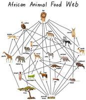 afrikaans dierlijk voedselweb op witte achtergrond
