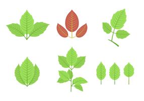 Gif ivy vector