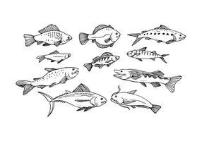 Gratis Fish Hand Getrokken Icon Vector