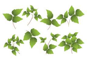 Poison ivy leaf vector