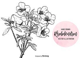 Gegraveerde Hand Getekende Rhododendron Vector