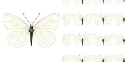 vlinderinsect en naadloze achtergrond vector