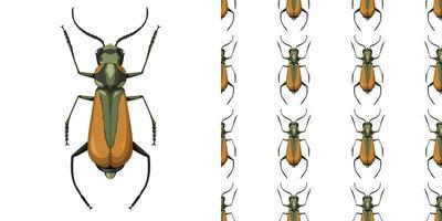 malachius aeneus insect en naadloze achtergrond vector