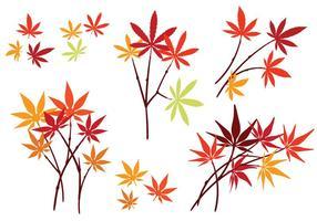 Set Japanse Esdoornbladeren Met Geïsoleerd Op Een Witte Achtergrond vector