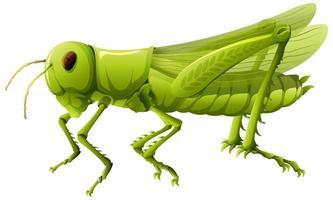 close up van sprinkhaan in cartoon stijl op witte achtergrond vector