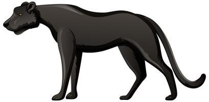zwarte panter in staande positie op witte achtergrond