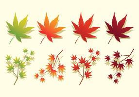 Japanse Esdoorn Bladeren vector