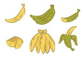 Handgebogen plantain vector