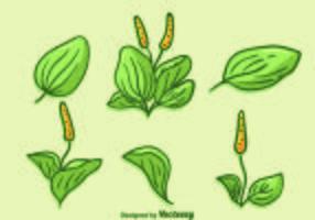 Hand getekende plantain vector