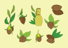 Jojoba plantaardige vector