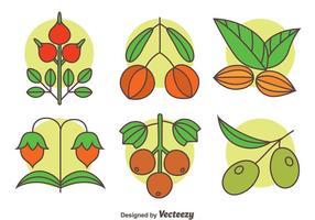 Kruid planten collectie vector