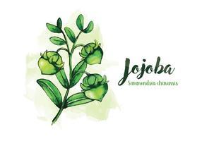 Jojoba Waterverf Illustratie vector