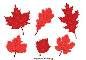 Japanse Maple Collection Vector