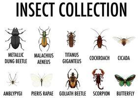 entomologie lijst van insectencollectie vector