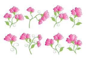Zoete Erwtbloemen vector