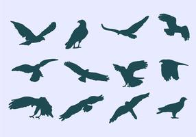 buizerd adelaar iconen vector