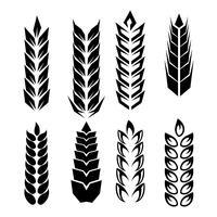 Tarwe oren pictogram Vector