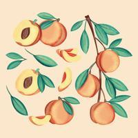 Vector Hand getrokken perziken