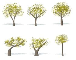 Gratis Gom Tree Vector