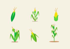 Corn Stalks Gratis Vector Pack