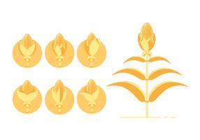 Gele maïsstengels pictogram vector