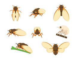 Cicada Vectoren