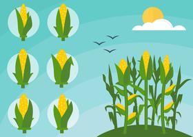 Gratis uitstekende maïsstelen Vectoren