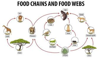 onderwijsaffiche van biologie voor voedselwebben en voedselketendiagram vector