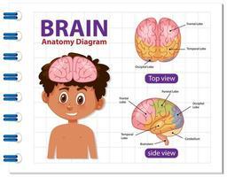 informatie poster van menselijk brein diagram