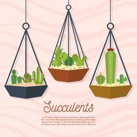 Platte succulente vectorillustratie