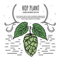 hop plant vector