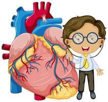 menselijk hart met een stripfiguur van een arts
