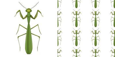 bidsprinkhaaninsect en naadloze achtergrond vector