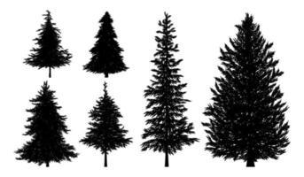 silhouet van sparren of pijnbomen