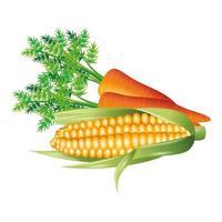 wortel en maïs plantaardig vectorontwerp vector