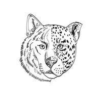 hoofd van half houten wolf en half jaguar panter of luipaard zwart-wit tekening vector