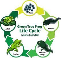 diagram met levenscyclus van kikker vector
