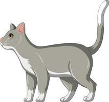 schattige grijze kat alleen geïsoleerd op een witte achtergrond vector
