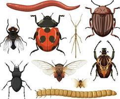 verschillende insecten collectie geïsoleerd op een witte achtergrond vector