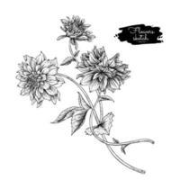 dahlia bloemtekeningen. vector