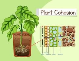 diagram dat plantcohesie toont vector