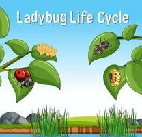 scène met levenscyclus van een lieveheersbeestje