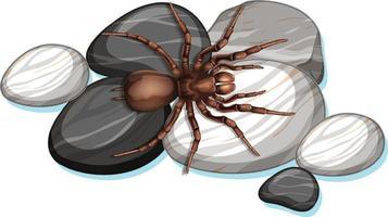 bovenaanzicht van spin op een steen op witte achtergrond
