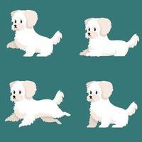 bichon bolognese in verschillende poses. vector