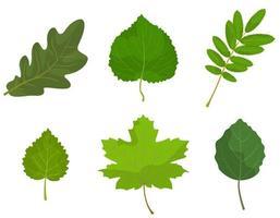 set van verschillende boombladeren.