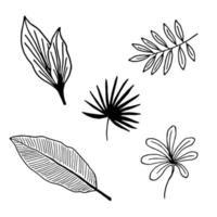 hand getrokken takken en bladeren van tropische planten vector