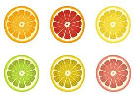 set van citrus vector illustratie ontwerpset geïsoleerd op een witte achtergrond